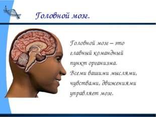 Головной мозг. Головной мозг – это главный командный пункт организма. Всеми