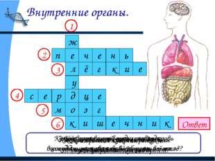 Внутренние органы. Ответ Как называется главное отделение «внутренней кухни»