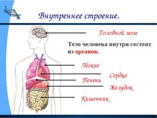 Внутреннее строение. Головной мозг Лёгкие Сердце Печень Желудок Кишечник Тело