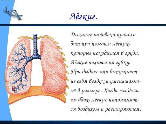 Лёгкие. Дыхание человека происхо- дит при помощи лёгких, которые находятся в...