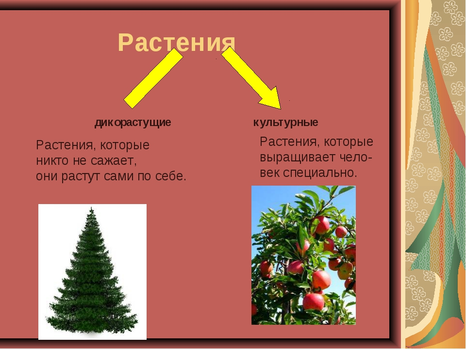 Доклад дикорастущие и культурные растения 7144