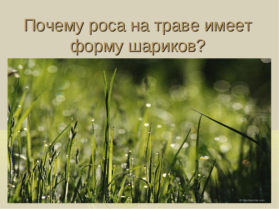 Почему роса на траве имеет форму шариков?