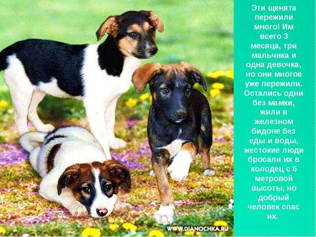Эти щенята пережили много! Им всего 3 месяца, три мальчика и одна девочка, но...