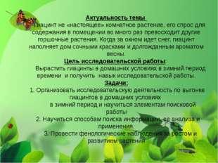 Актуальность темы Гиацинт не «настоящее» комнатное растение, его спрос для со