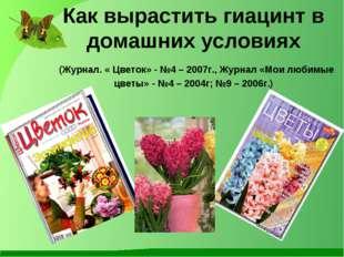 Как вырастить гиацинт в домашних условиях (Журнал. « Цветок» - №4 – 2007г., Ж