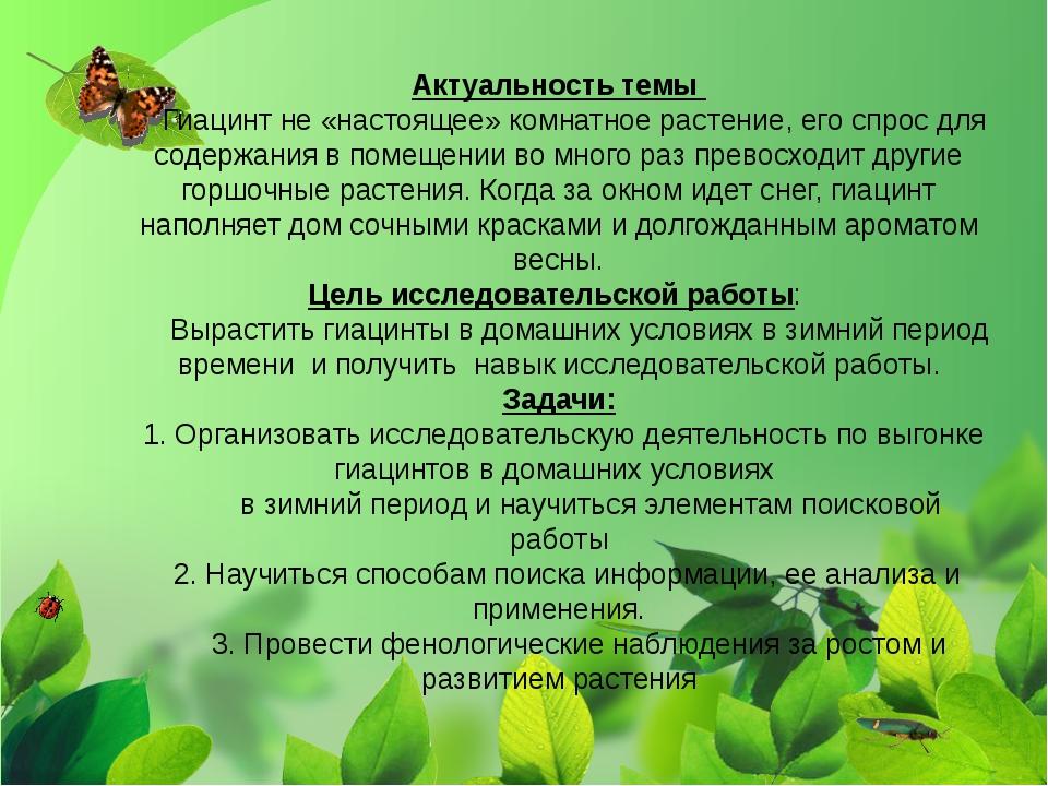 Актуальность темы Гиацинт не «настоящее» комнатное растение, его спрос для со...