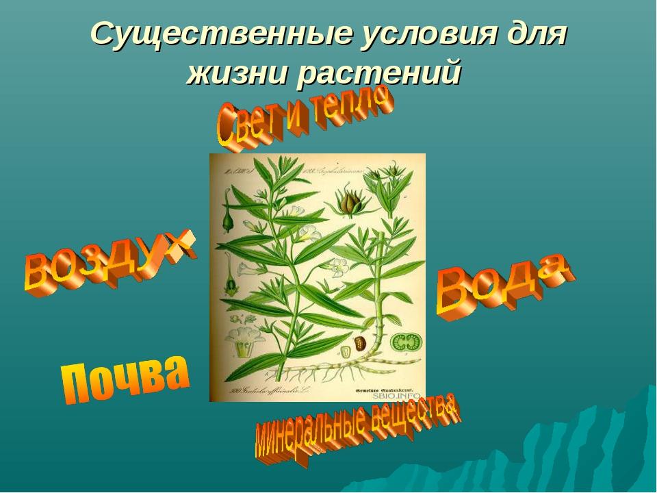 Существенные условия для жизни растений