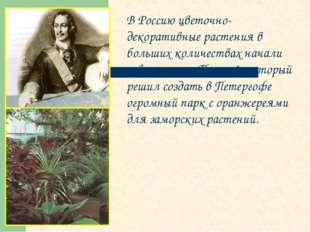 В Россию цветочно-декоративные растения в больших количествах начали завозить