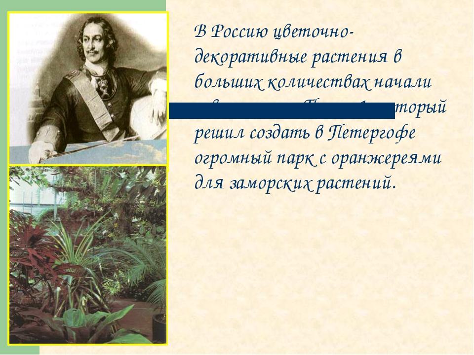 В Россию цветочно-декоративные растения в больших количествах начали завозить...