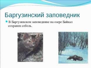 Баргузинский заповедник В Баргузинском заповеднике на озере Байкал сохранен с