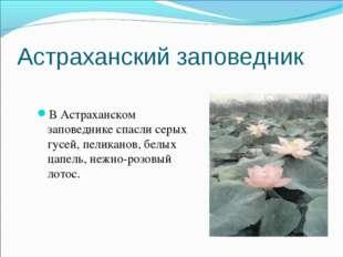 Астраханский заповедник В Астраханском заповеднике спасли серых гусей, пелика