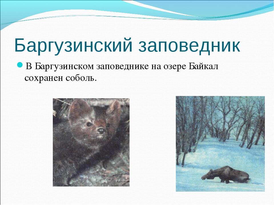 Баргузинский заповедник В Баргузинском заповеднике на озере Байкал сохранен с...