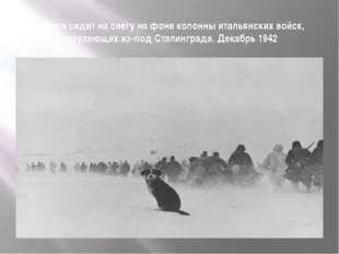Собака сидит на снегу на фоне колонны итальянских войск, отступающих из-под С