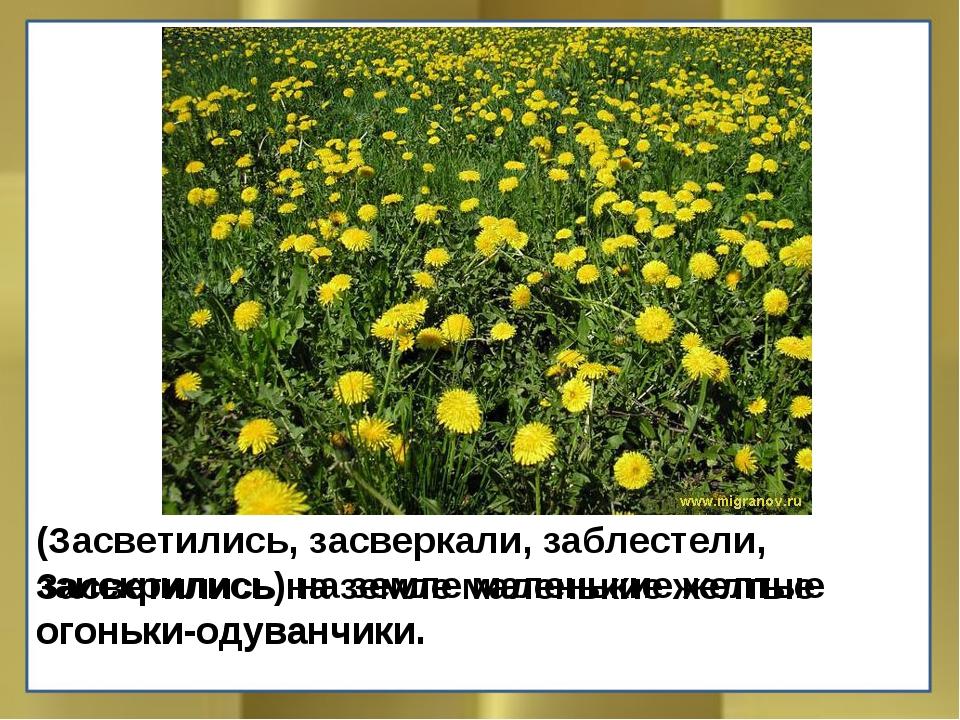 (Засветились, засверкали, заблестели, заискрились) на земле маленькие желтые...