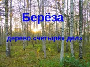 Берёза дерево «четырёх дел»