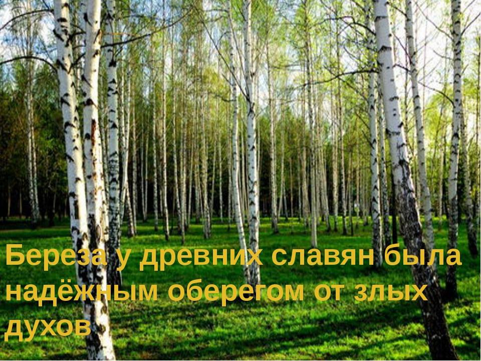 Береза у древних славян была надёжным оберегом от злых духов