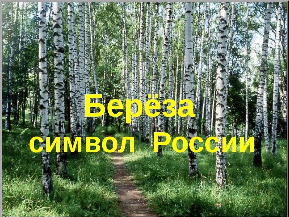 Берёза символ России