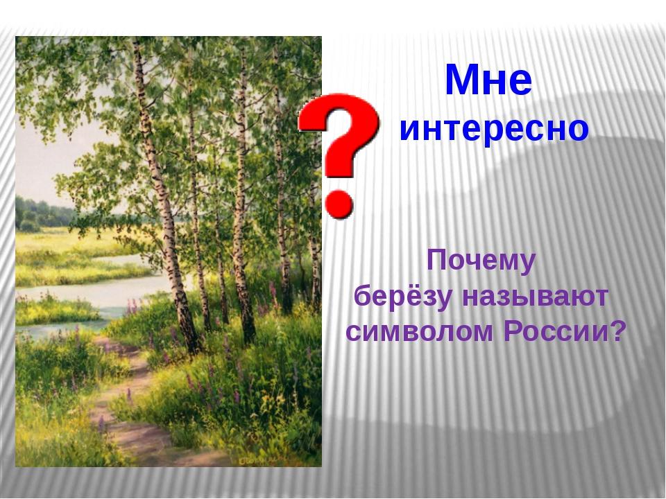 Мне интересно Почему берёзу называют символом России?