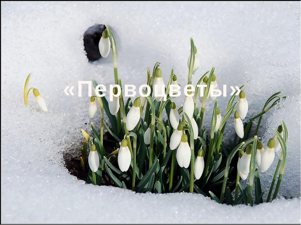 «Первоцветы»