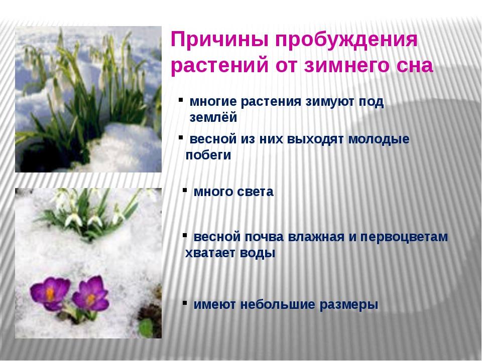 Причины пробуждения растений от зимнего сна многие растения зимуют под землё...