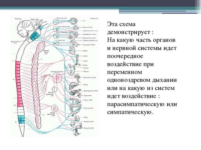 Эта схема демонстрирует : На какую часть органов и нервной системы идет пооче...