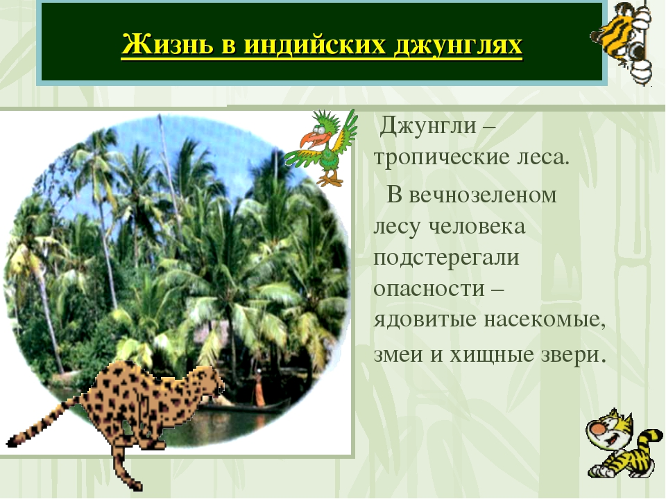 Джунгли – тропические леса. В вечнозеленом лесу человека подстерегали опасно...