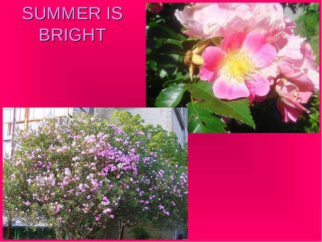 SUMMER IS BRIGHT
