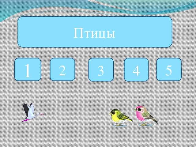 Птицы 1 2 3 4 5