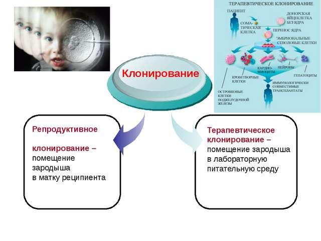 Репродуктивное клонирование – помещение зародыша в матку реципиента Клониров...