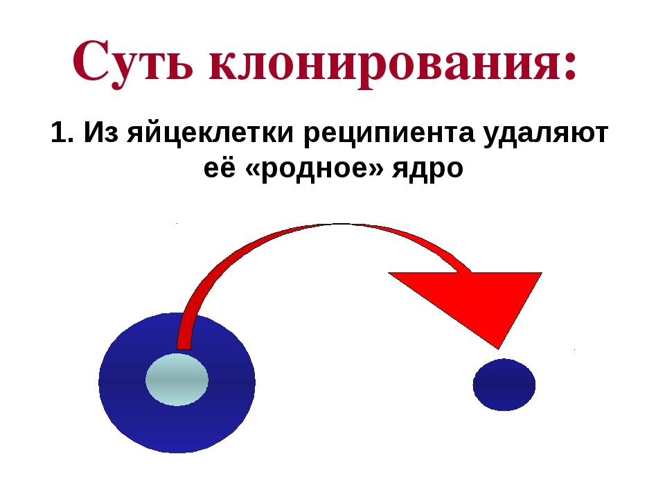 Суть клонирования: 1. Из яйцеклетки реципиента удаляют её «родное» ядро