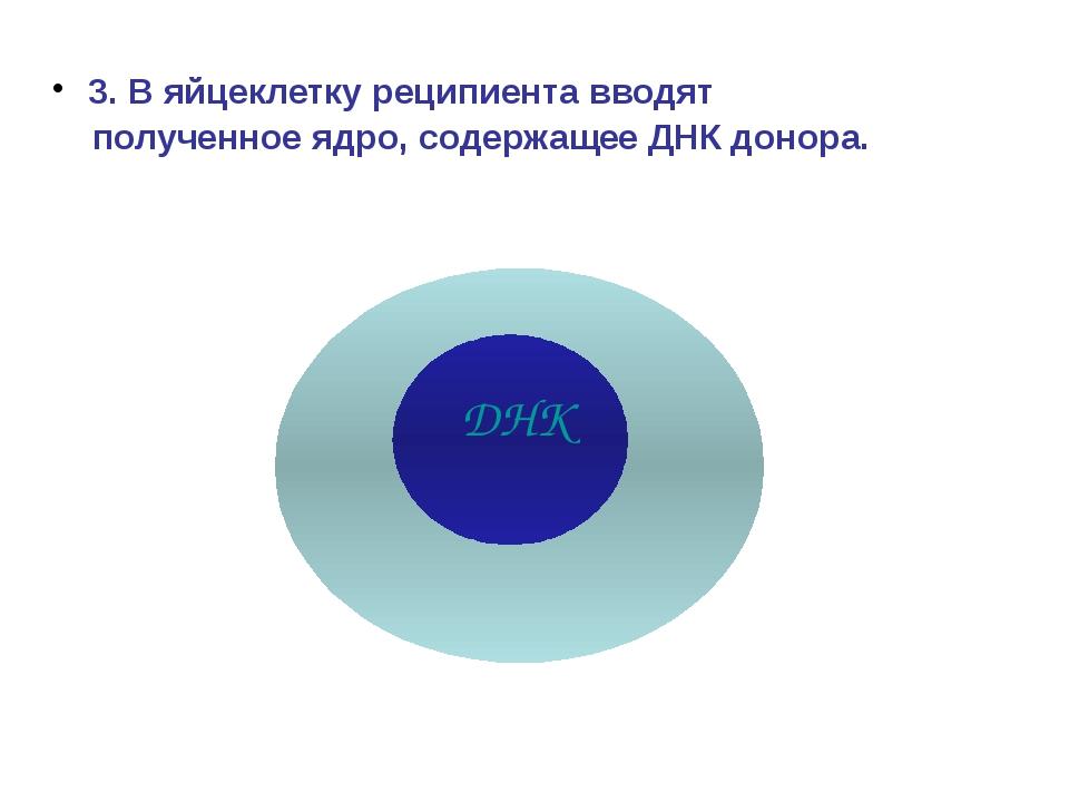 3. В яйцеклетку реципиента вводят полученное ядро, содержащее ДНК донора. ДНК