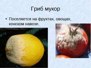 Гриб мукор Поселяется на фруктах, овощах, конском навозе.