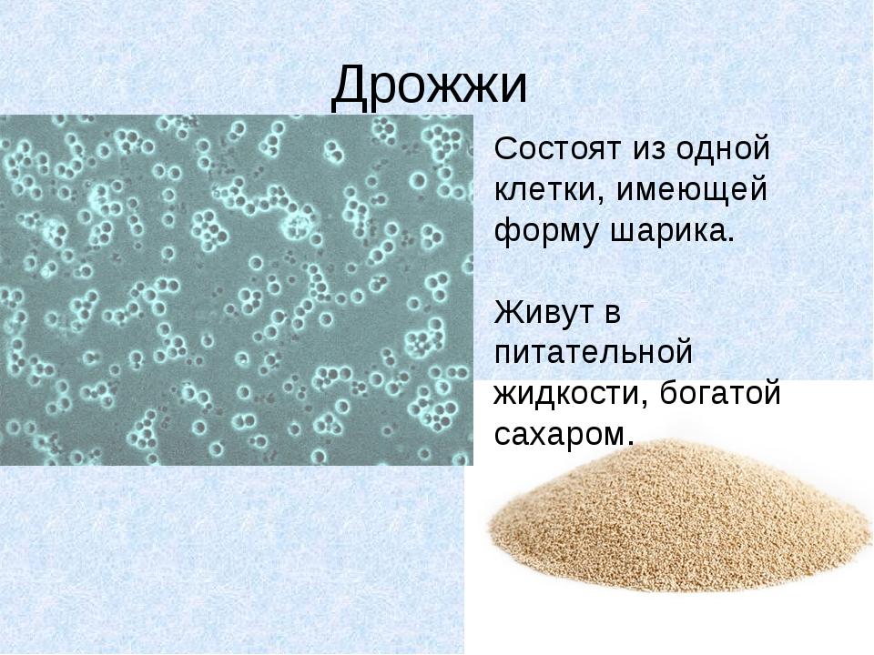 Дрожжи Состоят из одной клетки, имеющей форму шарика. Живут в питательной жид...