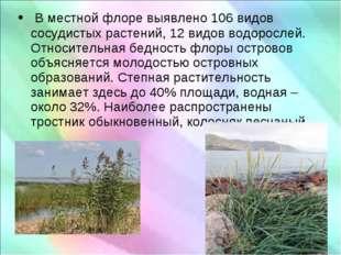 В местной флоре выявлено 106 видов сосудистых растений, 12 видов водорослей.