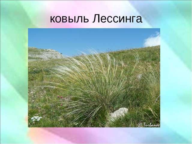 ковыль Лессинга