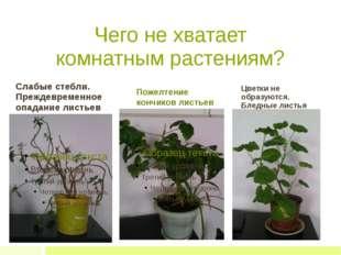 Чего не хватает комнатным растениям? Слабые стебли. Преждевременное опадание