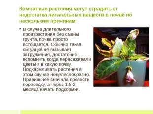 Комнатные растения могут страдать от недостатка питательных веществ в почве п