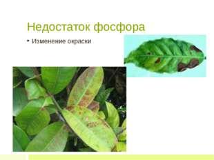Недостаток фосфора Изменение окраски