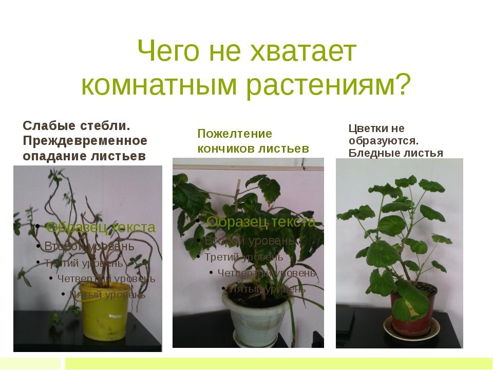 Чего не хватает комнатным растениям? Слабые стебли. Преждевременное опадание...