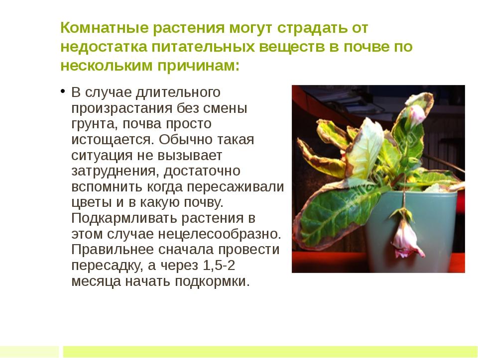 Комнатные растения могут страдать от недостатка питательных веществ в почве п...