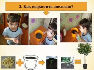 2. Как вырастить апельсин?