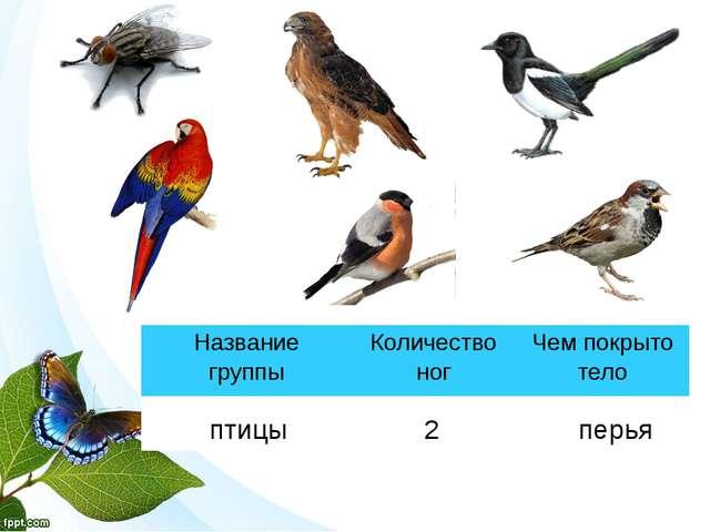 птицы 2 перья Название группы Количество ног Чем покрыто тело