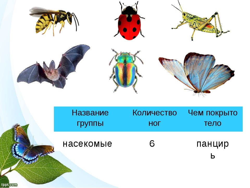 насекомые 6 панцирь Название группы Количество ног Чем покрыто тело