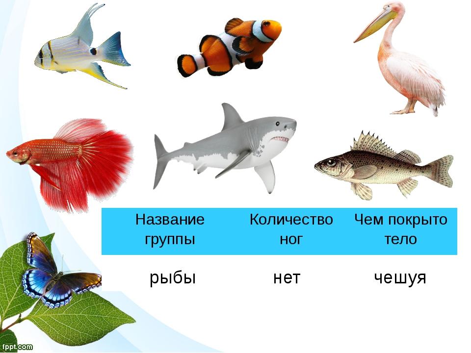 рыбы нет чешуя Название группы Количество ног Чем покрыто тело