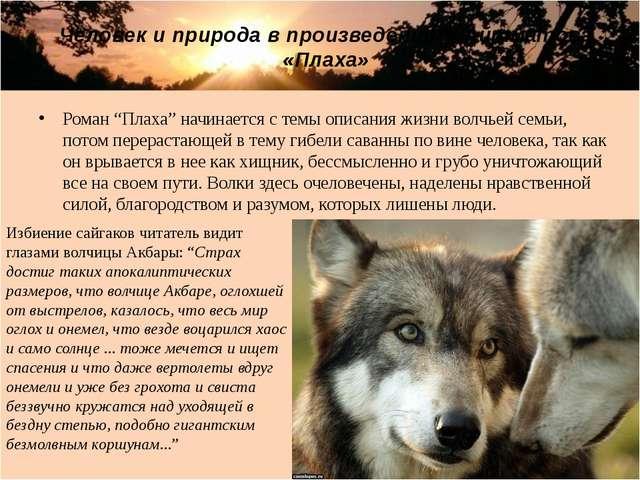 """Роман """"Плаха"""" начинается с темы описания жизни волчьей семьи, потом перераста..."""