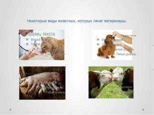 Основная задача ветеринара – это осмотр животных, назначение им лечения и не