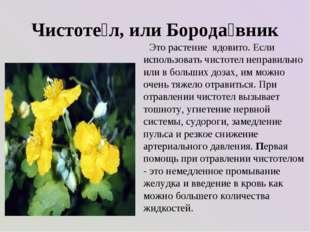 Чистоте́л, или Борода́вник Это растение ядовито. Если использовать чистотел н