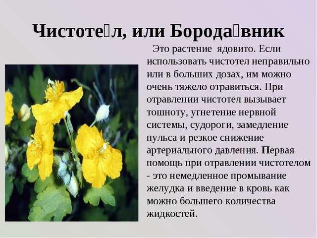 Чистоте́л, или Борода́вник Это растение ядовито. Если использовать чистотел н...