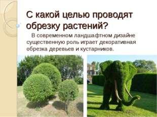 С какой целью проводят обрезку растений? В современном ландшафтном дизайне су
