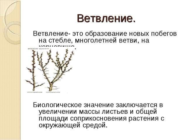 Ветвление. Ветвление- это образование новых побегов на стебле, многолетней ве...